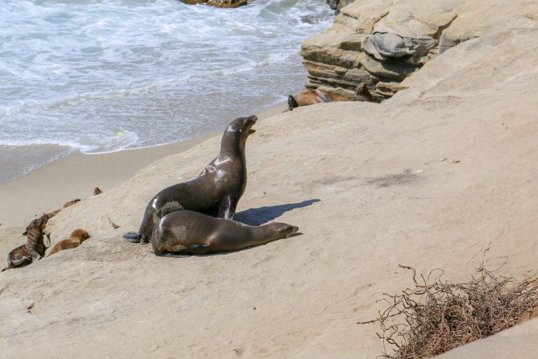 The Best of San Diego in Three Days or Less: La Jolla Seals