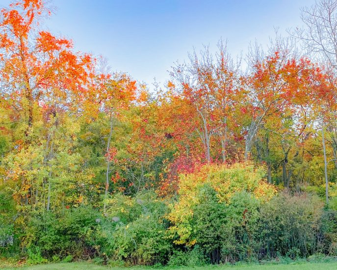 What I Loved in October, 2020: Autumn Foliage